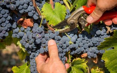 Calesco: il nuovo vino che riscalda